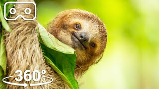 Hang Out In The Canopy With A Three-Toed Sloth | VR 360 | Seven Worlds, One Planet