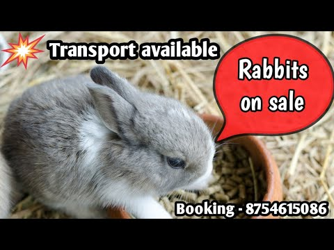 , title : 'Rabbits on sale in nagercoil | ₹200 முதல் | முயல்கள் விற்பனைக்கு | xavier rabbit farm | nagercoil'