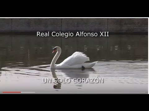 Video Youtube REAL COLEGIO ALFONSO XII
