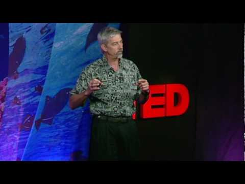 Stephen Palumbi: Following the mercury trail