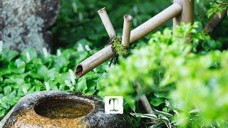 Tea Culture: How To Make Matcha, A Japanese Tea Ceremony #TeaStories   TEALEAVES