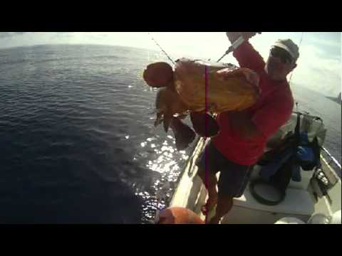 La pesca su un mormyshka la strega di video