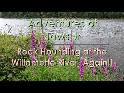 Rock Hounding in the Willamette River Again?   - Rockhounding