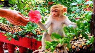 Awesome little Rose playing with Aunt in garden near home | Rose feeling much better outside #886