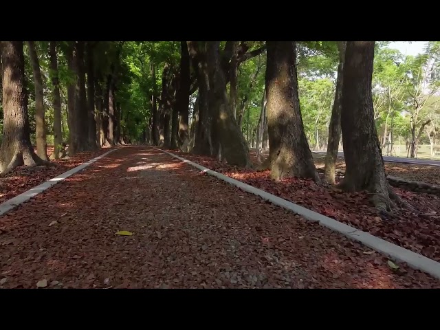 <html> <body> 茂管家帶您線上遊茂林─新威森林公園-在家也能來場森呼吸 </body> </html>