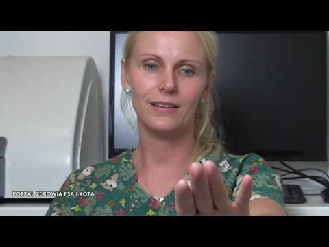 Human papillomavirus review article