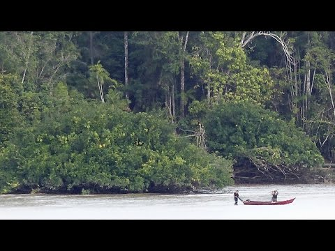 Amazon River Journey