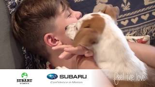 "2017 Subaru ""Feel The Love"" Commercial Spot"