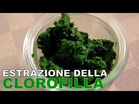 Estrazione della clorofilla - Tecniche di base