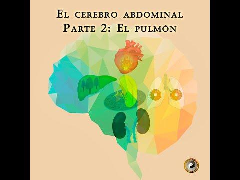 El cerebro abdominal 2: el pulmón