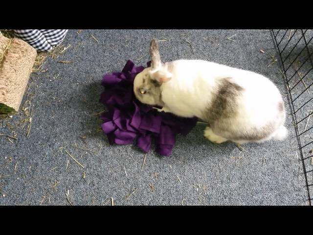 Snuffelkussens ook voor uw konijn
