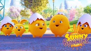 Sunny Bunnies | CONEJITOS BEBÉS | Dibujos animados para niños | WildBrain