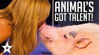 ANIMALS Got Talent Compilation! The Most Intelligent & Cleverest From Around The World!