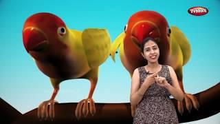 BIRD NAMES IN GUJARATI AND HINDI - Видео
