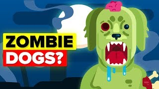 Why Did Scientists Create Zombie Dogs?