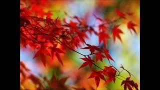 O Outono - Chimarruts #chimaoutono