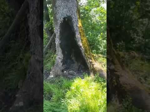 Mahallemizde Ağaç Yaktılar..