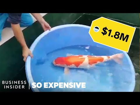 The Most Expensive Koi Fish in the World