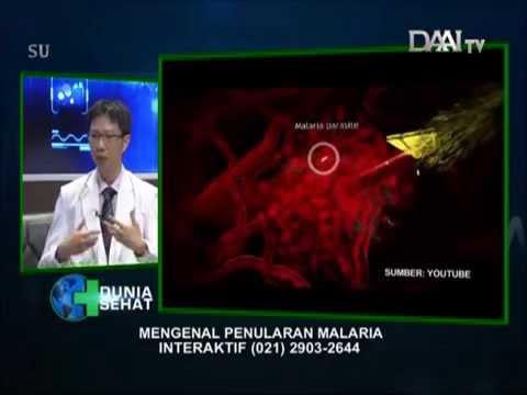 Video Penyakit Malaria :: dr. Sandy Perkasa, Sp.PD Part 2