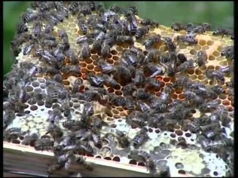 Опорный Пункт Пчеловодства. часть 2
