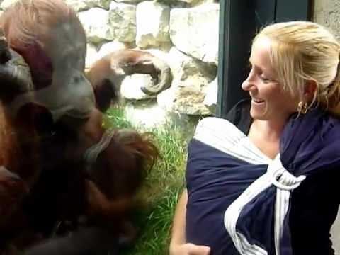 Orangutangens mammahjerte smelter av menneskebabyen