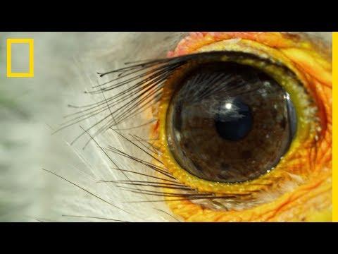 Aszcariasis fertőző