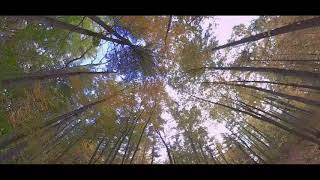 Cinewhoop Through The Woods (Diatone Taycan Emuflight w/ Insta360 Test) Cinematic FPV
