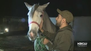 Horse Stable In Richmond Faces Eviction