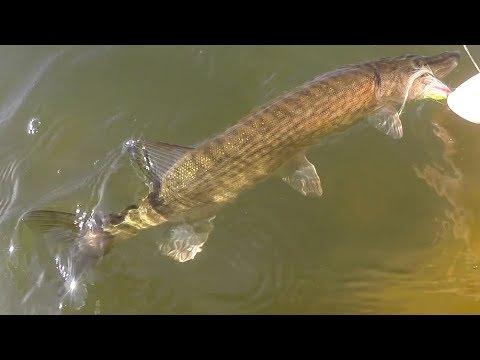 Ano ang mga parasites sa herring