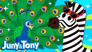 Animal Fashion Show | Animal Song For Kids | Zebra, Cheetah, Leopard | Juny&Tony By KizCastle