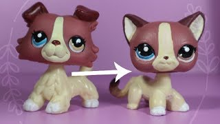 LPS Collie To Shorthair Cat Custom! Collie #1262 [HD] + Giveaway OPEN!!