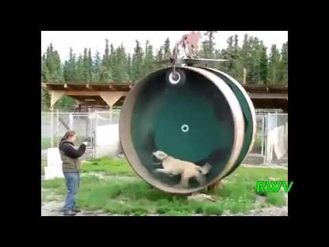 Il sesso russo in bagno con la zia