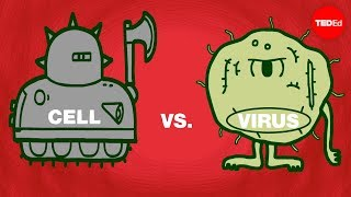 DFDN - Cell vs. virus: A battle for health