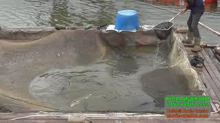 Форум платная рыбалка в юсупово