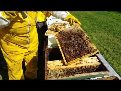 Il mondo delle api, lezione pratica di apicoltura