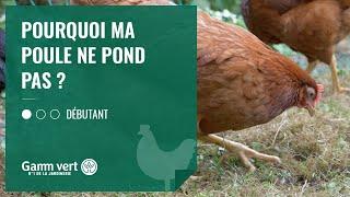 [TUTO] Pourquoi Ma Poule Ne Pond Pas ? – Jardinerie Gamm Vert