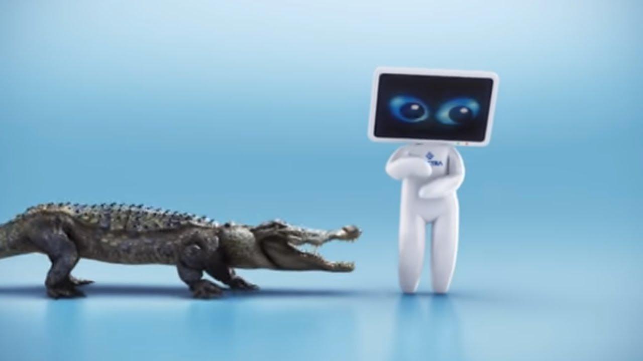 PVR krokodyl