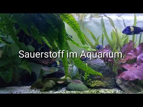 Sauerstoffmangel im Aquarium messen und beheben