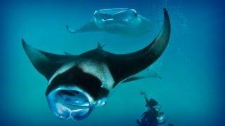 Maldives: diving paradise