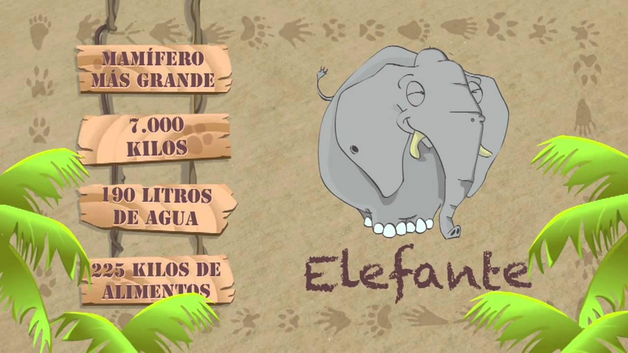 Las características del ELEFANTE