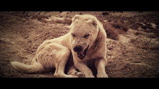 Kontra K   Wölfe (Videoclip)
