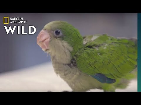 A Quaking Parrot | Dr. T, Lone Star Vet