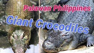 Palawan Wildlife Rescue and Conservation Center (Crocodile Farm), Puerto Princesa