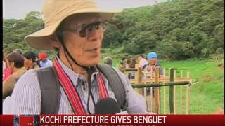 Cherry Blossoms From Japan Planted In Benguet