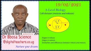 Cell divisions (meiosis and mitosis)