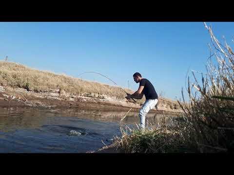 Pesca de tarariras en la Región