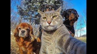ПРИКОЛЫ с Животными Июнь 2018 Смешные Видео Приколы про животных