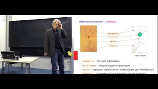 Лекция 1. Нейронные сети. Теоретические результаты