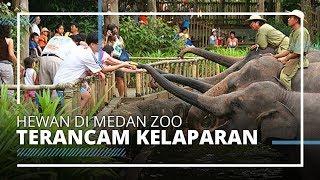 Dampak Penutupan Kebun Binatang karena Pandemi, Hewan di Medan Zoo Terancam Kelaparan