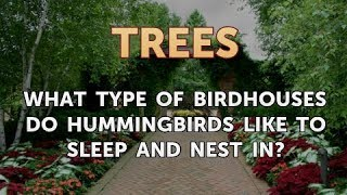 What Type Of Birdhouses Do Hummingbirds Like To Sleep And Nest In?